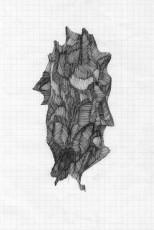 shy-montress_zeichnung_14x20cm