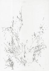 im-gebüsch-2013randlos-600x854
